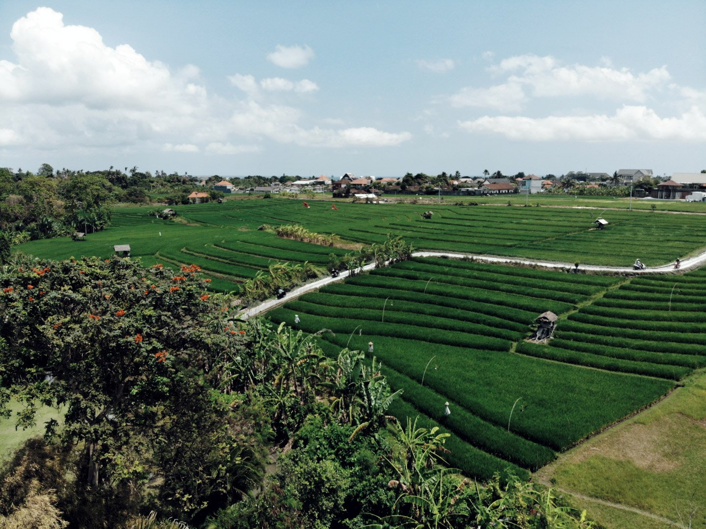 Aerial drone view of rice fields and greenery beyond Own Villa eco resort between Umalas and Canggu in southwest Bali