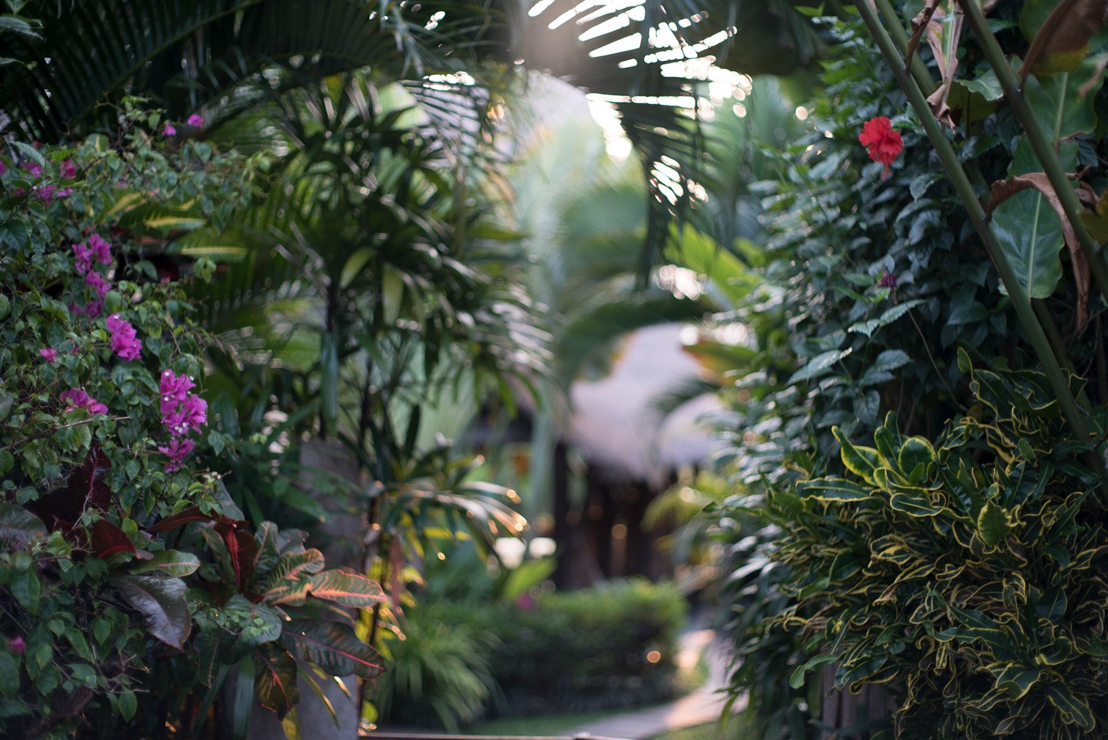 Green entrance surrounded by plants and flowers of the sustainable eco design resort Own Villa in Bali